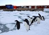 Antarctique : la station Zhongshan en plein été