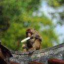 Des macaques jouent dans le parc Qianlingshan de Guiyang