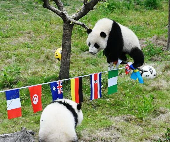 Lancement de la Coupe du monde de football des pandas dans le Sichuan