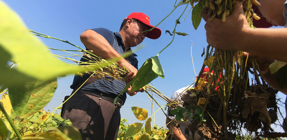 Selon le Centre national d'information sur les céréales et l'huile de Chine, le pays sera tout à fait capable de faire face à la pénurie de soja importé des états-Unis à la suite de l'augmentation des droits de douane.