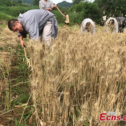 Des scientifiques cartographient le génome du blé tendre