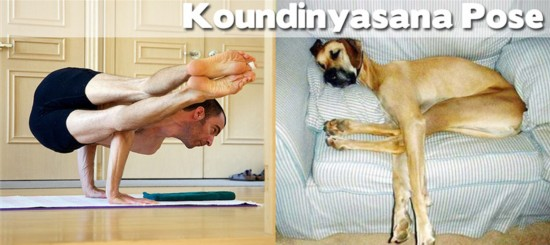 Photo : ces animaux qui pratiquent le Yoga... (18)